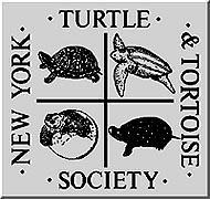 NYTTS Logo